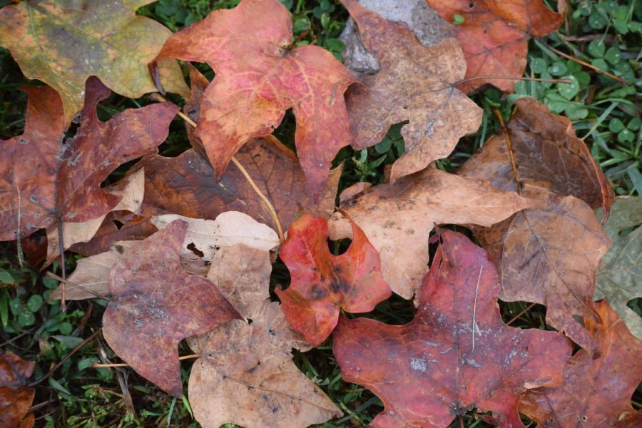 One+of+many+things+that+people+like+about+fall+is+the+leaves+changing.