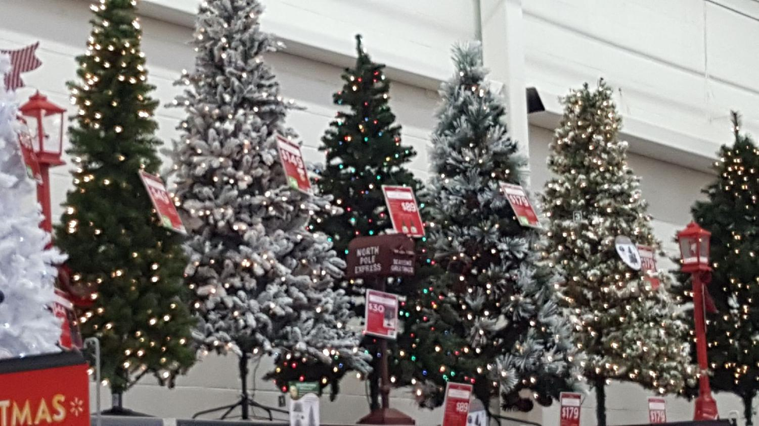 Christmas trees on display and for sale weeks before Thanksgiving.