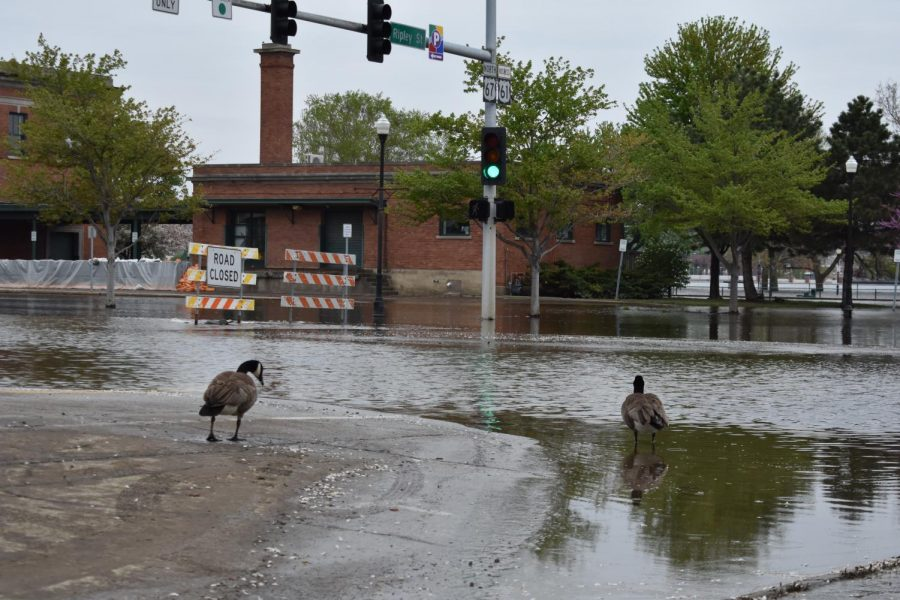 The flooding in Davenport has reached River Drive with water deep enough to surround buildings. Geese and ducks are able to venture from the river to the downtown area.